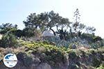Aeginitissa | Aegina | GriechenlandWeb.de foto 26 - Foto GriechenlandWeb.de