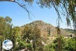 GriechenlandWeb.de Palaiochora | Aegina | GriechenlandWeb.de foto 4 - Foto GriechenlandWeb.de