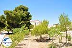GriechenlandWeb Afaia | Aegina | GriechenlandWeb.de foto 1 - Foto GriechenlandWeb.de