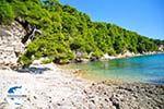 GriechenlandWeb.de Milia Alonissos | Sporaden | GriechenlandWeb.de foto 7 - Foto GriechenlandWeb.de