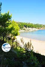 GriechenlandWeb.de Chrisi Milia | Alonissos Sporaden | GriechenlandWeb.de foto 7 - Foto GriechenlandWeb.de