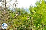 GriechenlandWeb.de Kokkinokastro | Alonissos Sporaden | GriechenlandWeb.de foto 13 - Foto GriechenlandWeb.de