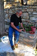GriechenlandWeb.de Noten kraken in Alonissos Stadt | Sporaden | GriechenlandWeb.de - Foto GriechenlandWeb.de