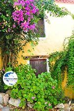 Alonissos Stadt (Chora) | Sporaden | GriechenlandWeb.de foto 86 - Foto GriechenlandWeb.de