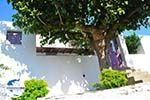 Alonissos Stadt (Chora)   Sporaden   GriechenlandWeb.de foto 115 - Foto GriechenlandWeb.de