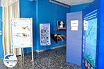 GriechenlandWeb MOM, bescherming Monachus-Monachus zeehonden Alonissos | Sporaden foto 2 - Foto GriechenlandWeb.de