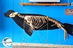 GriechenlandWeb.de MOM, bescherming Monachus-Monachus zeehonden Alonissos | Sporaden foto 7 - Foto GriechenlandWeb.de