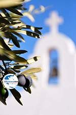 GriechenlandWeb.de Olijfboom kerje Agios Petros Steni Vala Alonissos | Sporaden | GriechenlandWeb.de - Foto GriechenlandWeb.de
