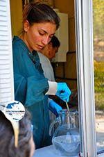 GriechenlandWeb.de MOM, bescherming Monachus-Monachus zeehonden Alonissos | Sporaden foto 11 - Foto GriechenlandWeb.de