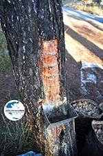 GriechenlandWeb.de Hars bossen van Agioi Anargiri klooster | Alonissos Sporaden | GriechenlandWeb.de foto 1 - Foto GriechenlandWeb.de