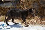 GriechenlandWeb.de Chozoviotissa Amorgos - Insel Amorgos - Kykladen foto 104 - Foto GriechenlandWeb.de