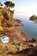 Klein zandstrand tussen de dennebomen Skala | Agkistri Griechenland | Foto 4 - Foto GriechenlandWeb.de