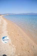 GriechenlandWeb.de Nea Potidea | Kassandra Chalkidiki | GriechenlandWeb.de foto 12 - Foto GriechenlandWeb.de