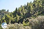 GriechenlandWeb.de Strände und natuur Vourvourou | Sithonia Chalkidiki | GriechenlandWeb.de foto 32 - Foto GriechenlandWeb.de