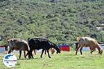 GriechenlandWeb.de Irgendwo zwischen Paralia Sykias und Kalamitsi | Sithonia Chalkidiki | Foto 5 - Foto GriechenlandWeb.de