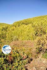 GriechenlandWeb Irgendwo zwischen Kalamitsi und Port Koufo | Sithonia Chalkidiki | GriechenlandWeb.de foto 5 - Foto GriechenlandWeb.de