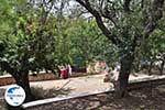De beroemde steen van Hoemrus in Daskalopetra - Insel Chios - Foto GriechenlandWeb.de