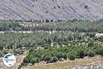GriechenlandWeb.de Overal rotsen, in het midden een bos - Insel Chios - Foto GriechenlandWeb.de