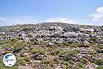 GriechenlandWeb Rotsen und struiken in Noord Chios - Insel Chios - Foto GriechenlandWeb.de