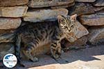 GriechenlandWeb.de Agia Theodoti Ios - Insel Ios - Kykladen Griechenland foto 277 - Foto GriechenlandWeb.de