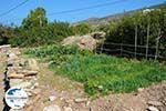 GriechenlandWeb.de Psathi Ios - Insel Ios - Kykladen Griechenland foto 312 - Foto GriechenlandWeb.de