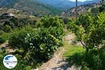 GriechenlandWeb.de Psathi Ios - Insel Ios - Kykladen Griechenland foto 322 - Foto GriechenlandWeb.de