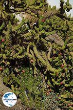 GriechenlandWeb.de Chora Ios - Insel Ios - Kykladen Griechenland foto 494 - Foto GriechenlandWeb.de