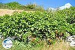 GriechenlandWeb Arkasa (Arkassa) | Insel Karpathos | GriechenlandWeb.de 003 - Foto GriechenlandWeb.de