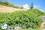 GriechenlandWeb Arkasa (Arkassa) | Insel Karpathos | GriechenlandWeb.de 004 - Foto GriechenlandWeb.de
