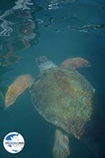 GriechenlandWeb Megisti Kastelorizo - Insel Kastellorizo Dodekanes - Foto 74 - Foto GriechenlandWeb.de