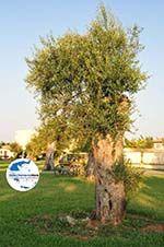 GriechenlandWeb Moraitika | Korfu | GriechenlandWeb.de - foto 10 - Foto GriechenlandWeb.de