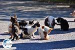 GriechenlandWeb.de Katzen Asklepion   Insel Kos   Griechenland foto 1 - Foto GriechenlandWeb.de