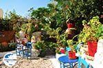 GriechenlandWeb.de Kos Stadt (Kos-Stadt)   Insel Kos   Griechenland foto 55 - Foto GriechenlandWeb.de