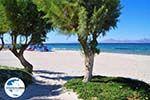 GriechenlandWeb.de Marmari Kos | Insel Kos | Griechenland foto 3 - Foto GriechenlandWeb.de