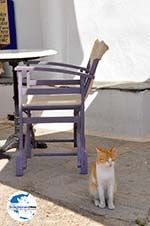 GriechenlandWeb Avlemonas Kythira | Griechenland | GriechenlandWeb.de 7 - Foto GriechenlandWeb.de