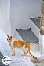 GriechenlandWeb.de Kythira Stadt (Chora) | Griechenland | GriechenlandWeb.de 37 - Foto GriechenlandWeb.de