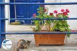 GriechenlandWeb.de Potamos Kythira - Foto GriechenlandWeb.de