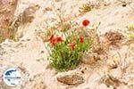 GriechenlandWeb Paliochora Kythira   Griechenland   GriechenlandWeb.de foto 19 - Foto GriechenlandWeb.de