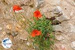 GriechenlandWeb.de Paliochora Kythira | Griechenland | GriechenlandWeb.de foto 24 - Foto GriechenlandWeb.de