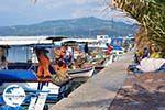 GriechenlandWeb Bootjes aan vissershaven van Skala Kalllonis - Foto GriechenlandWeb.de