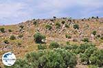 Ten westen van de baai van Kalloni foto 002 - Foto GriechenlandWeb.de