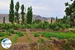 Landbouwtuinen Skala Eressos foto 2 - Foto GriechenlandWeb.de