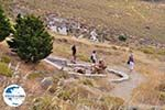 Versteende woud Sigri foto7 - Foto GriechenlandWeb.de