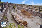 Versteende woud Sigri foto11 - Foto GriechenlandWeb.de