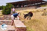 Versteende woud Sigri - Even de ezel voeden - Foto GriechenlandWeb.de