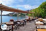 GriechenlandWeb Terras restaurant cafetaria Olive Press te Molyvos - Foto GriechenlandWeb.de