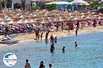 GriechenlandWeb.de Platis Gialos Mykonos | Griechenland | GriechenlandWeb.de foto 10 - Foto GriechenlandWeb.de