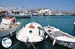 GriechenlandWeb.de Naoussa Paros | Kykladen | Griechenland foto 51 - Foto GriechenlandWeb.de
