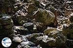 GriechenlandWeb.de Epta Piges - Zeven bronnen Rhodos - Rhodos Dodekanes - Foto 160 - Foto GriechenlandWeb.de