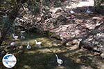 GriechenlandWeb.de Epta Piges - Zeven bronnen Rhodos - Rhodos Dodekanes - Foto 170 - Foto GriechenlandWeb.de